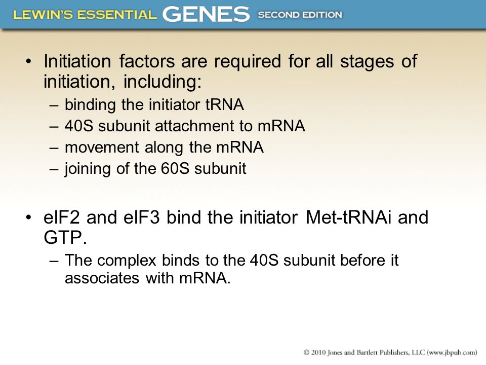 Initiation factors are required for all stages of initiation, including: –binding the initiator tRNA –40S subunit attachment to mRNA –movement along t