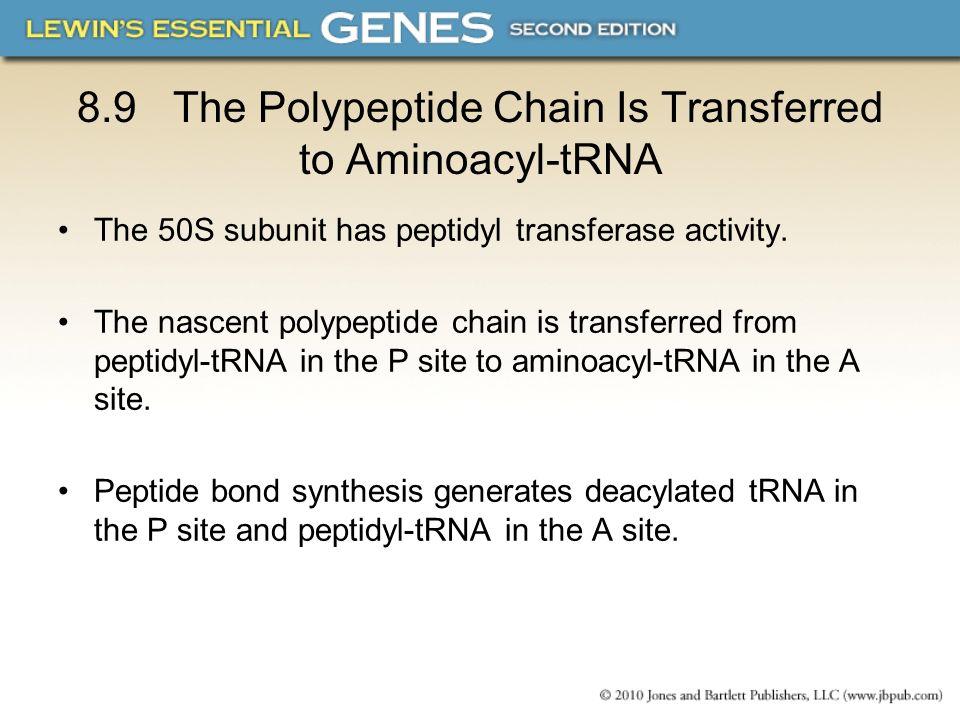 8.9The Polypeptide Chain Is Transferred to Aminoacyl-tRNA The 50S subunit has peptidyl transferase activity. The nascent polypeptide chain is transfer