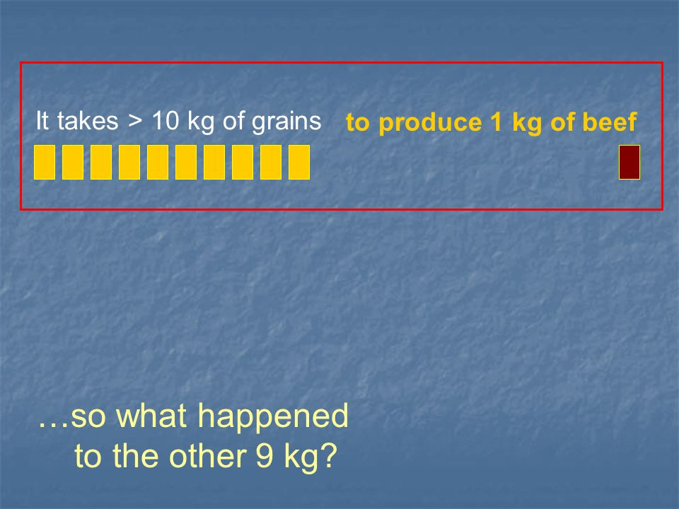 …so what happened to the other 9 kg? It takes > 10 kg of grains to produce 1 kg of beef