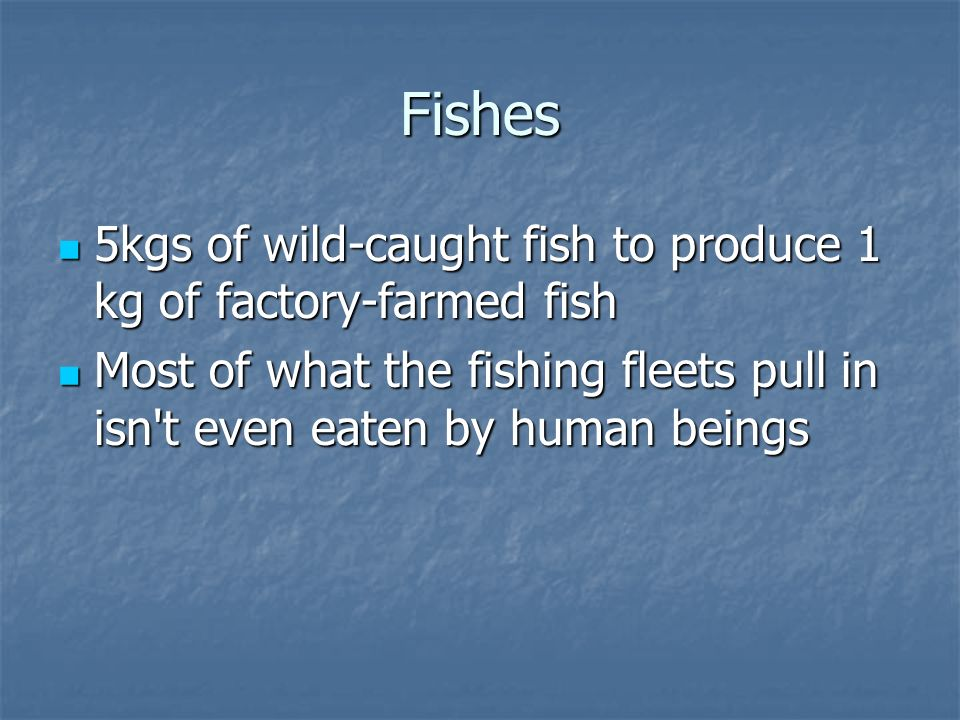 Fishes 5kgs of wild-caught fish to produce 1 kg of factory-farmed fish 5kgs of wild-caught fish to produce 1 kg of factory-farmed fish Most of what the fishing fleets pull in isn t even eaten by human beings Most of what the fishing fleets pull in isn t even eaten by human beings