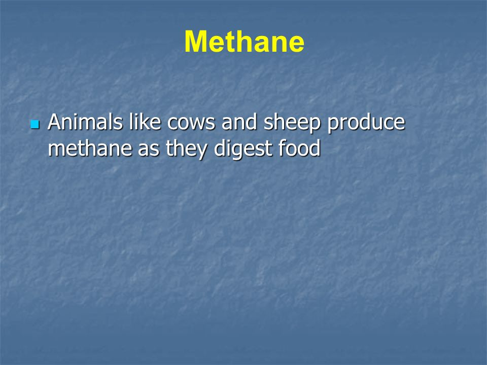 Animals like cows and sheep produce methane as they digest food Animals like cows and sheep produce methane as they digest food Methane