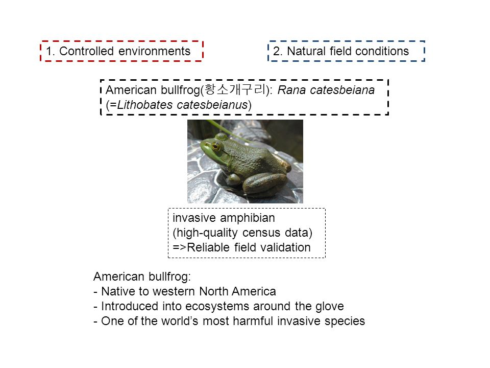 American bullfrog( ): Rana catesbeiana (=Lithobates catesbeianus) 1. Controlled environments2. Natural field conditions invasive amphibian (high-quali
