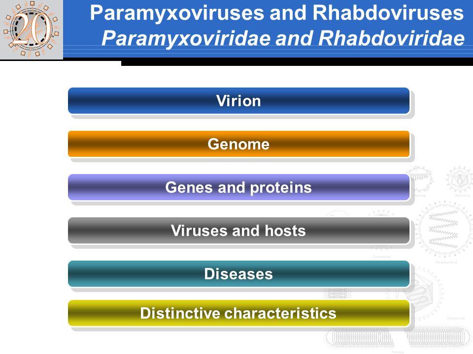 Paramyxoviruses and Rhabdoviruses Paramyxoviridae and Rhabdoviridae Virion Genome Genes and proteins Viruses and hosts Diseases Distinctive characteri