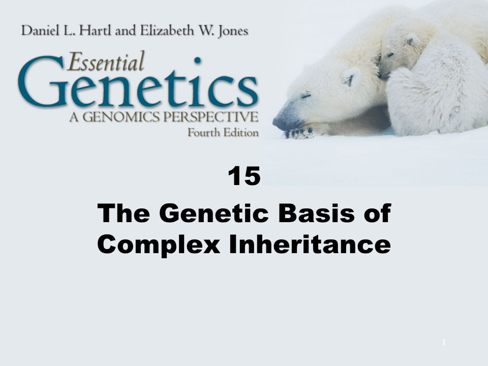 12 Genetic Variation Genotype-environment (G-E) association = certain genotypes are preferentially associated with certain environments There is no genotypic variance in a genetically homogeneous population g 2 = 0 When the number of genes affecting a quantitative trait is not too large, the number, n, of genes contributing to the trait is n = D 2 /8 g 2 D = difference between parental strains