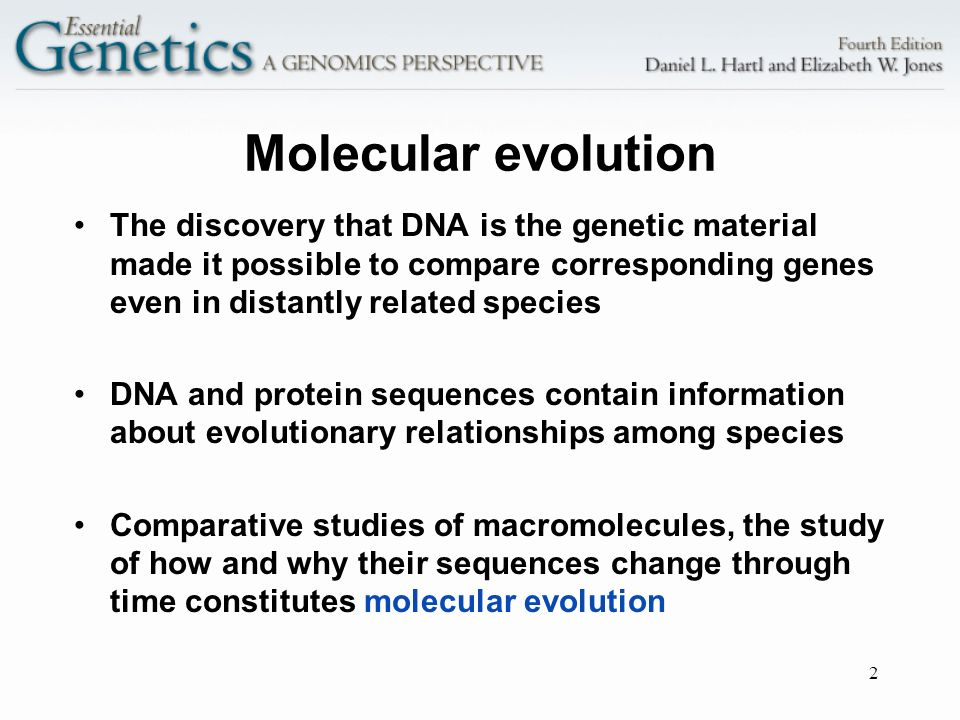 2 Molecular evolution The discovery that DNA is the genetic material made it possible to compare corresponding genes even in distantly related species