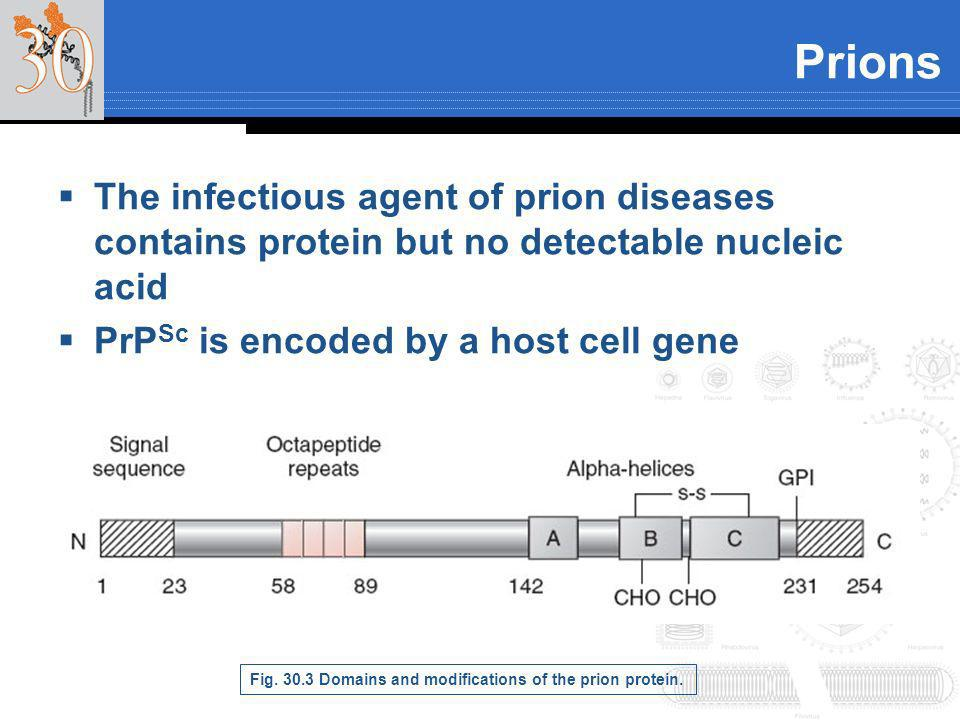 The infectious agent of prion diseases contains protein but no detectable nucleic acid PrP Sc is encoded by a host cell gene Prions Fig. 30.3 Domains