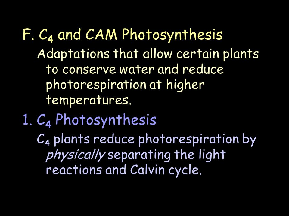 F. C 4 and CAM Photosynthesis Adaptations that allow certain plants to conserve water and reduce photorespiration at higher temperatures. 1. C 4 Photo