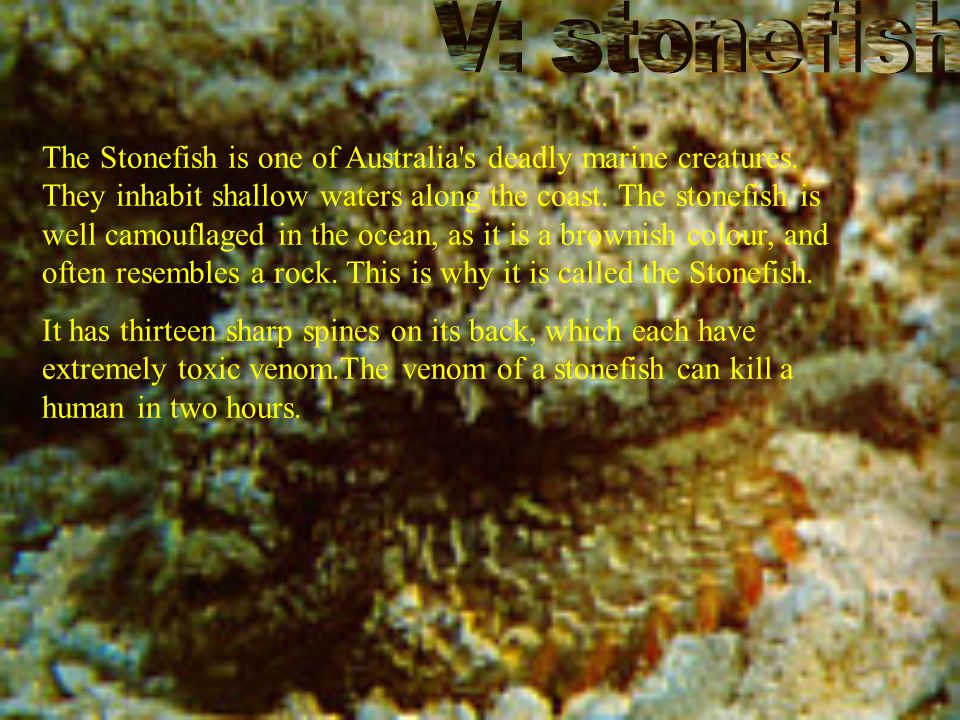 The Stonefish is one of Australia s deadly marine creatures.