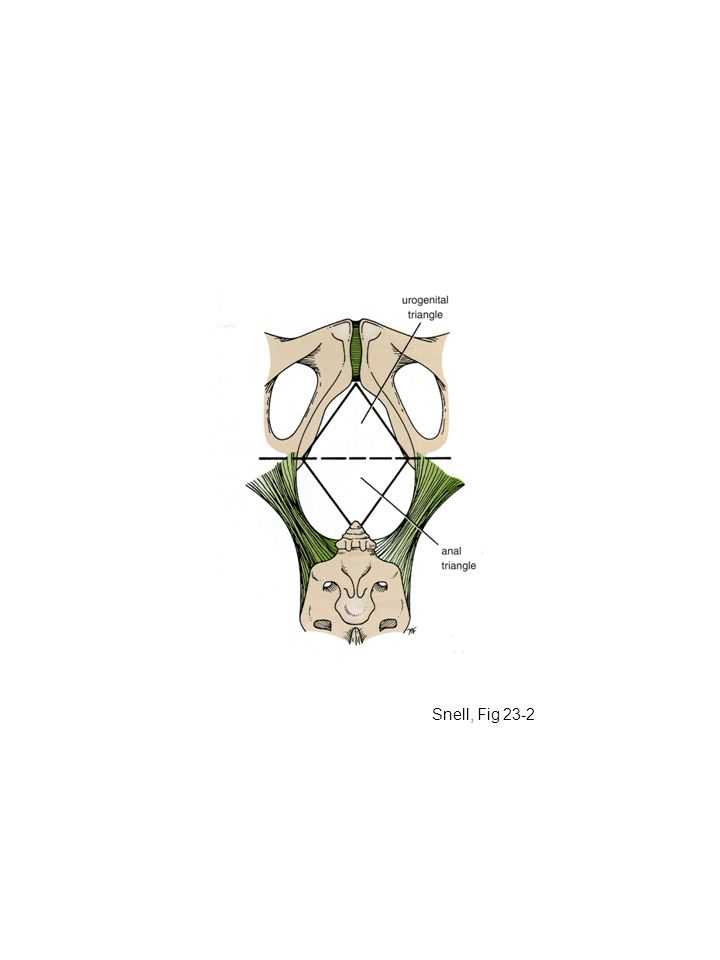 Snell, Fig 23-2