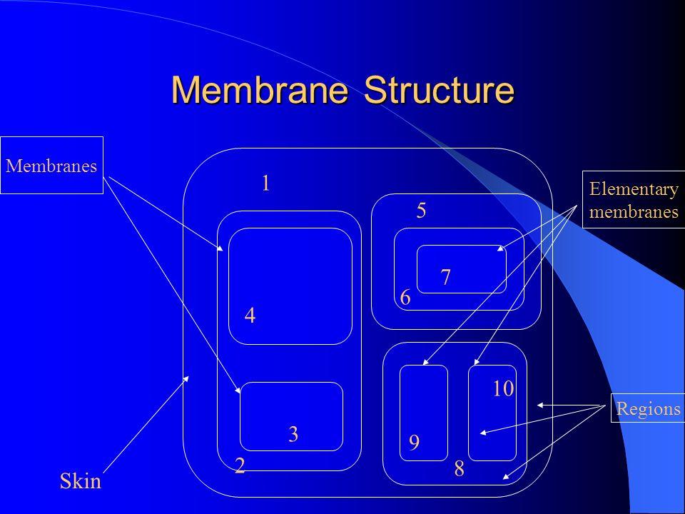 Membrane Structure Skin Membranes Elementary membranes Regions 1 2 3 4 5 6 7 8 9 10