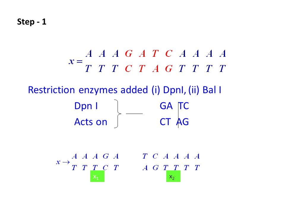 Restriction enzymes added (i) DpnI,(ii) Bal I Dpn IGA TC Acts on CT AG x1x1 x2x2 Step - 1