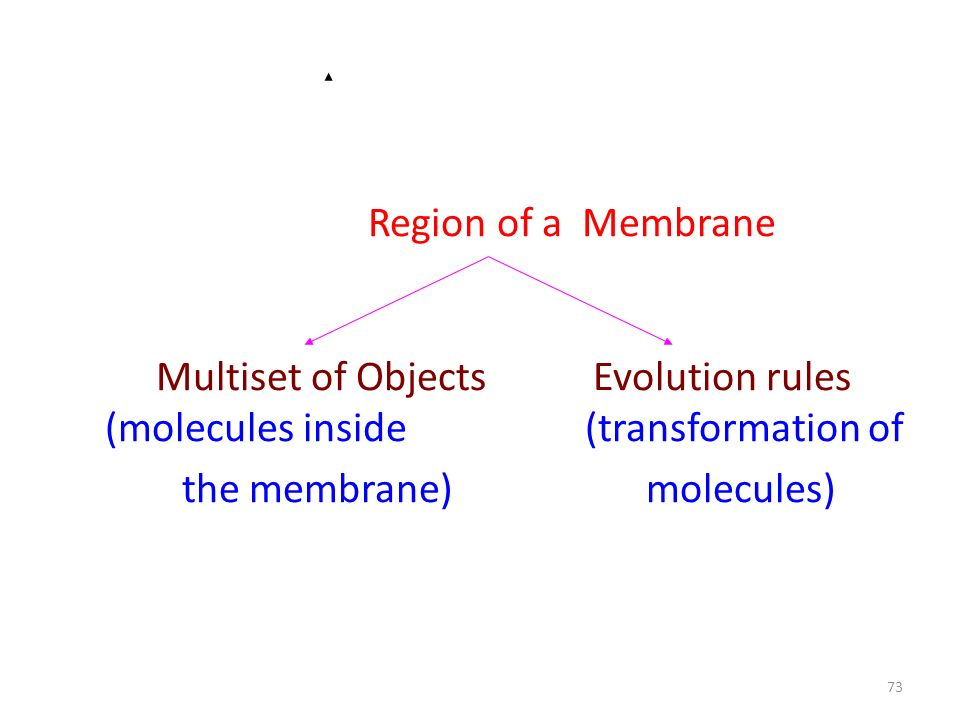 73 Region of a Membrane Multiset of Objects Evolution rules (molecules inside (transformation of the membrane) molecules)