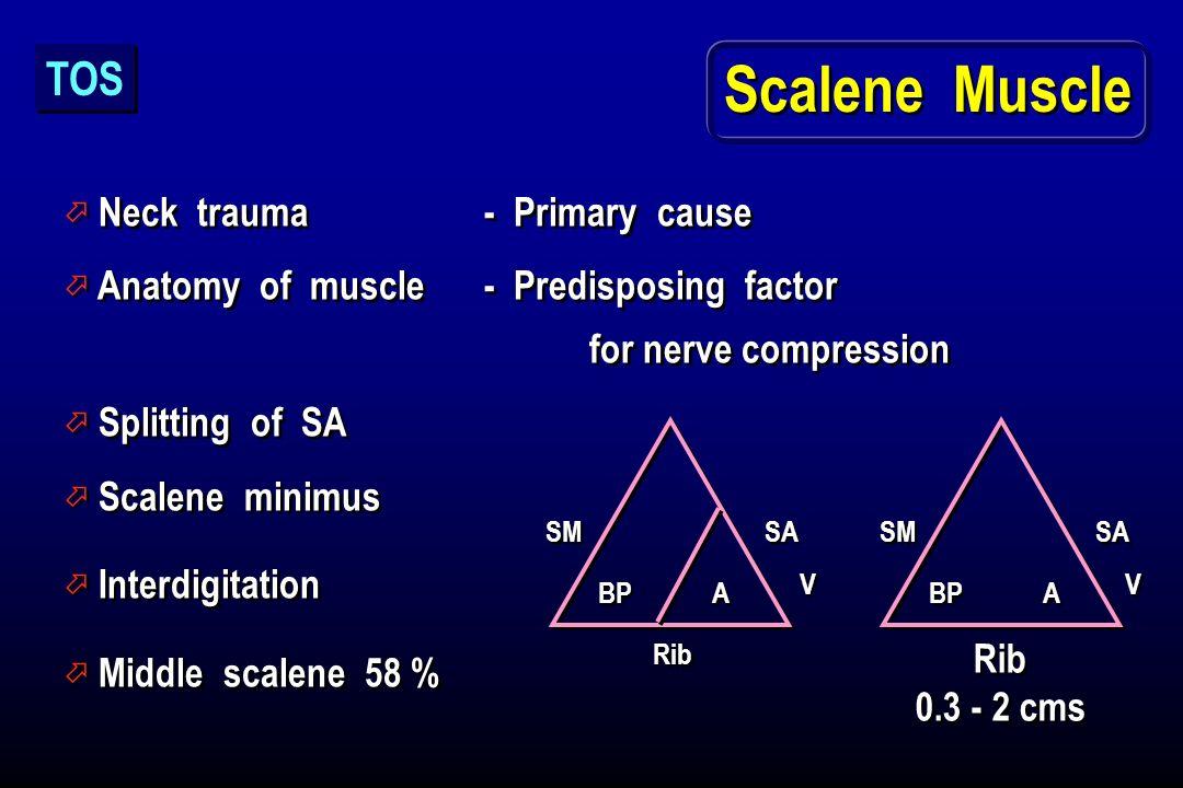 Scalene Muscle ö Neck trauma - Primary cause ö Anatomy of muscle - Predisposing factor for nerve compression ö Splitting of SA ö Scalene minimus ö Int