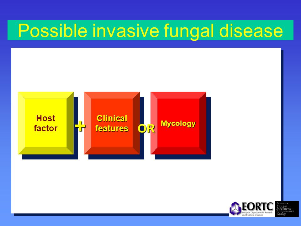 Probable invasive fungal infective disease Host factor Clinical features Mycology++ Invasive Fungal Infections Cooperative Group