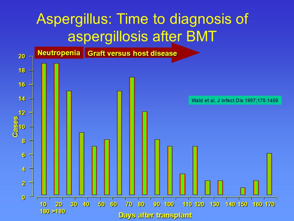 Focus on invasive aspergillosis