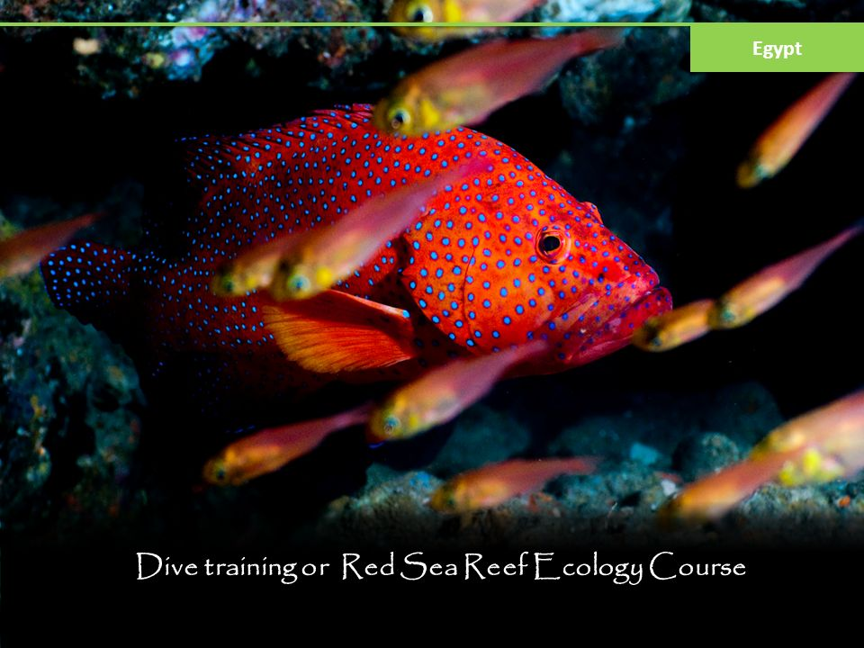 Dive training or Red Sea Reef Ecology Course Egypt
