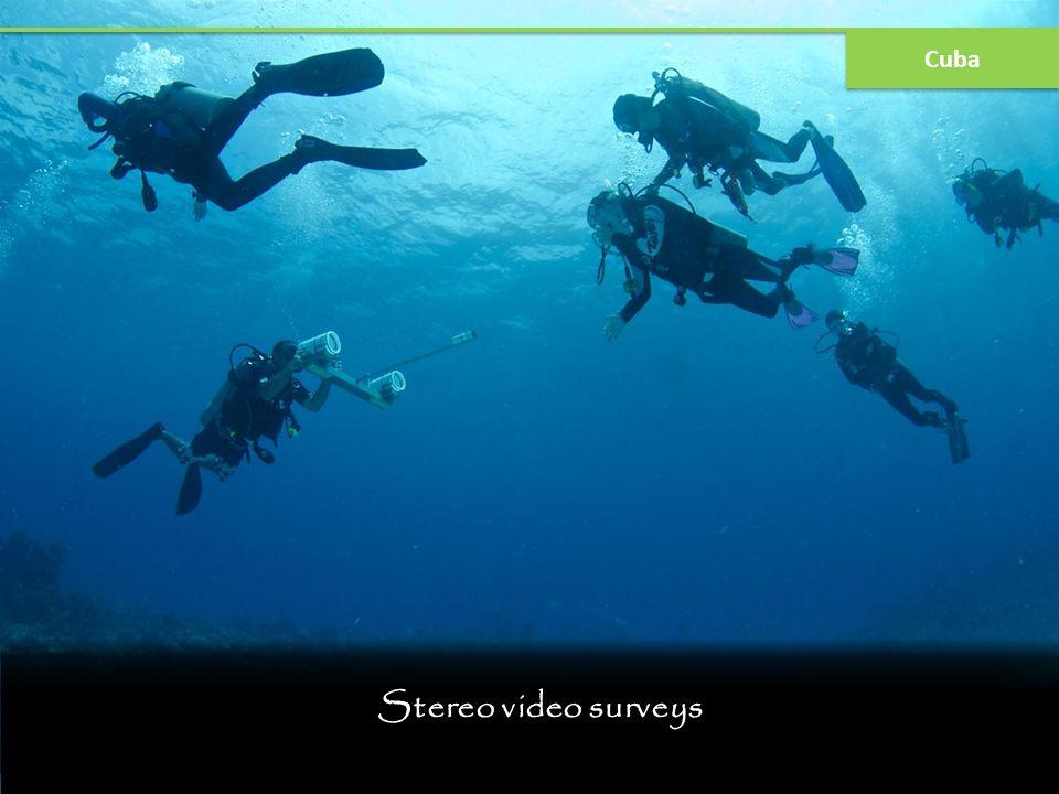 Stereo video surveys Cuba