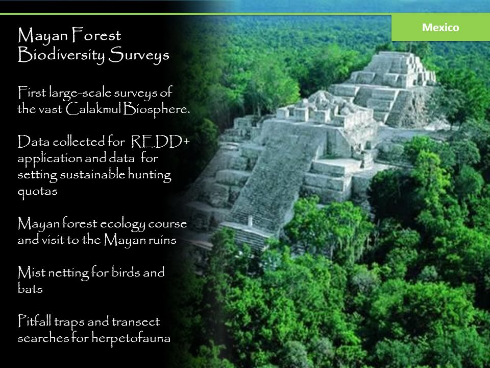 Mayan Forest Biodiversity Surveys First large-scale surveys of the vast Calakmul Biosphere. Data collected for REDD+ application and data for setting