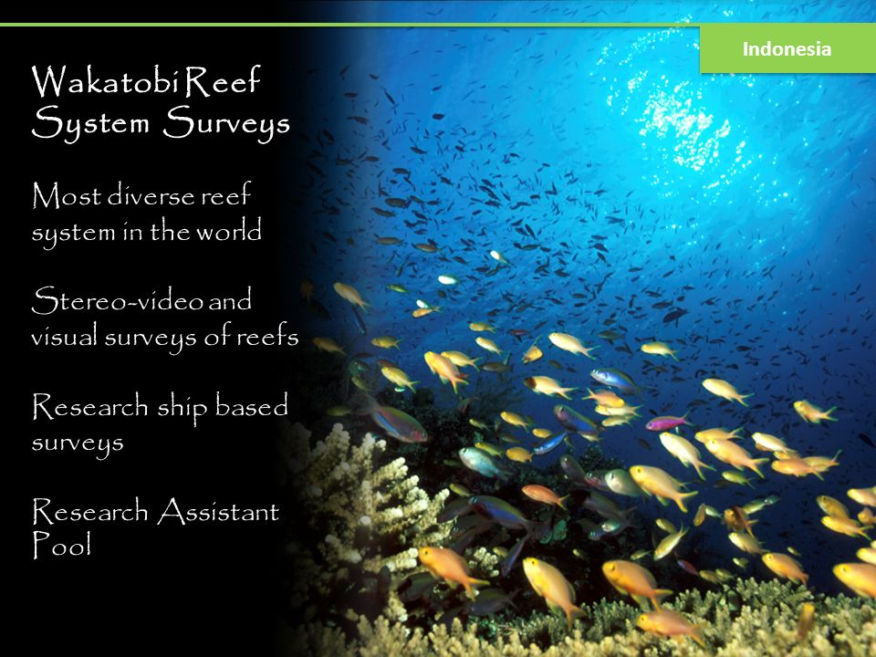 Wakatobi Reef System Surveys Most diverse reef system in the world Stereo-video and visual surveys of reefs Research ship based surveys Research Assis