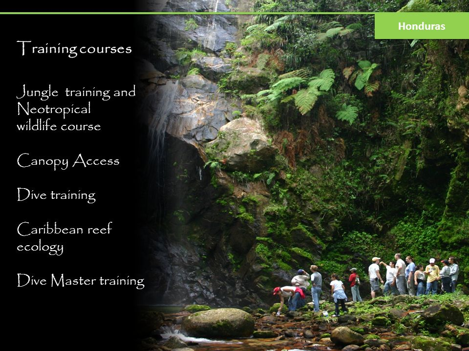 Training courses Jungle training and Neotropical wildlife course Canopy Access Dive training Caribbean reef ecology Dive Master training Honduras
