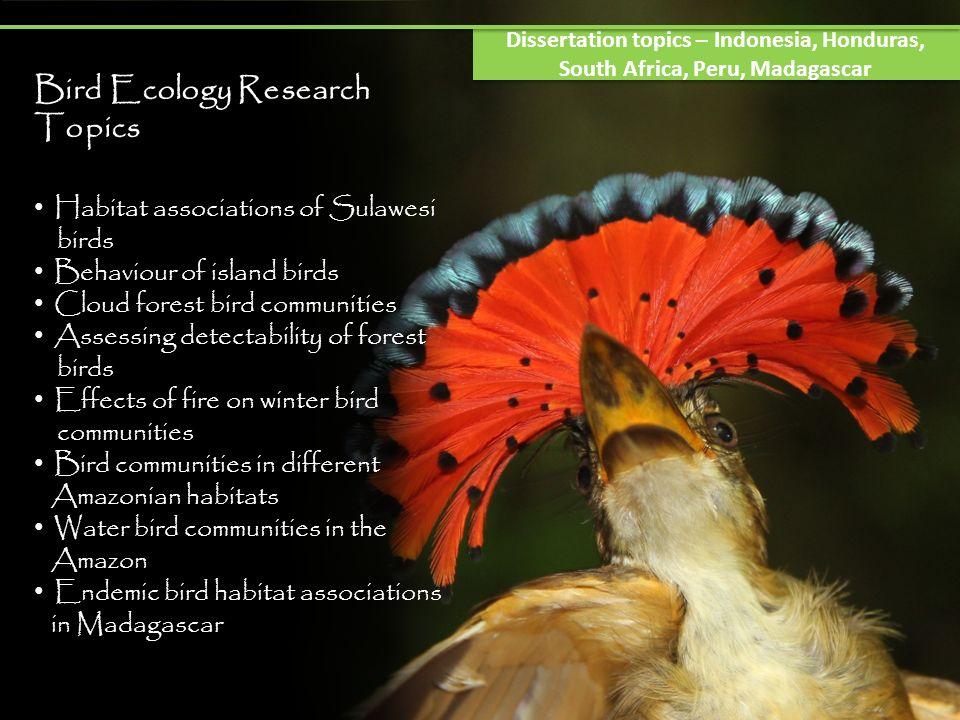 Bird Ecology Research Topics Habitat associations of Sulawesi birds Behaviour of island birds Cloud forest bird communities Assessing detectability of
