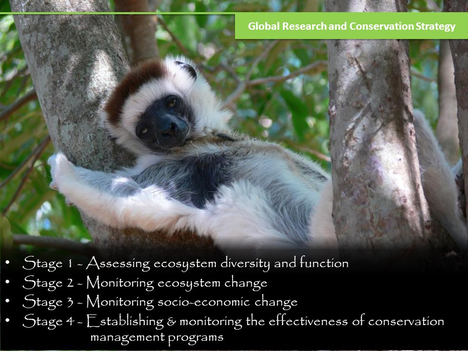 Botany and Invertebrate Research Topics Environmental impacts on leaf formation Epiphytes in cloud forests Forest disturbance impacts on butterflies Orchid bee diversity Niche separation in tarantulas Dung beetle communities in cloud forest Dissertation topics – Indonesia, Honduras