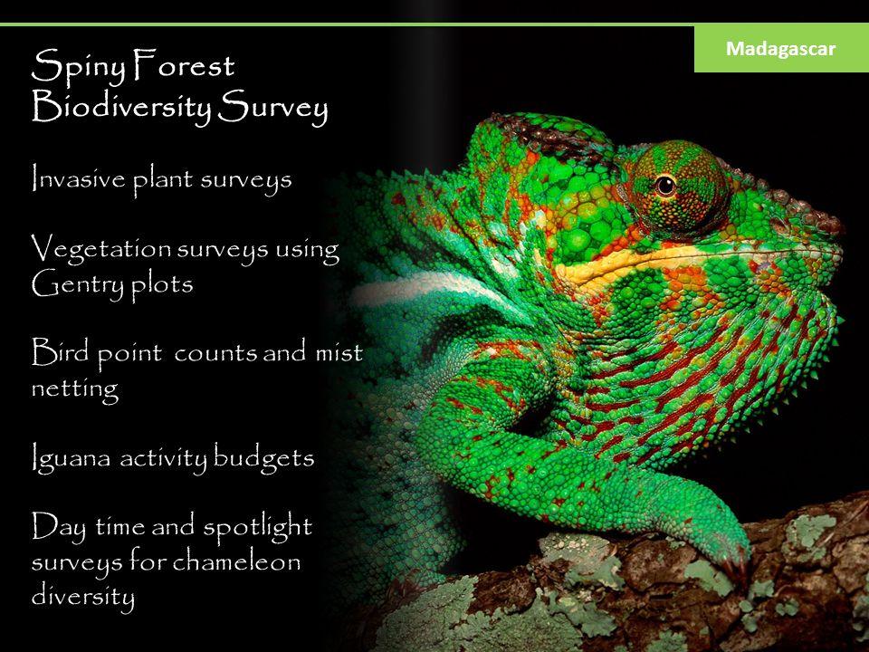 Spiny Forest Biodiversity Survey Invasive plant surveys Vegetation surveys using Gentry plots Bird point counts and mist netting Iguana activity budge