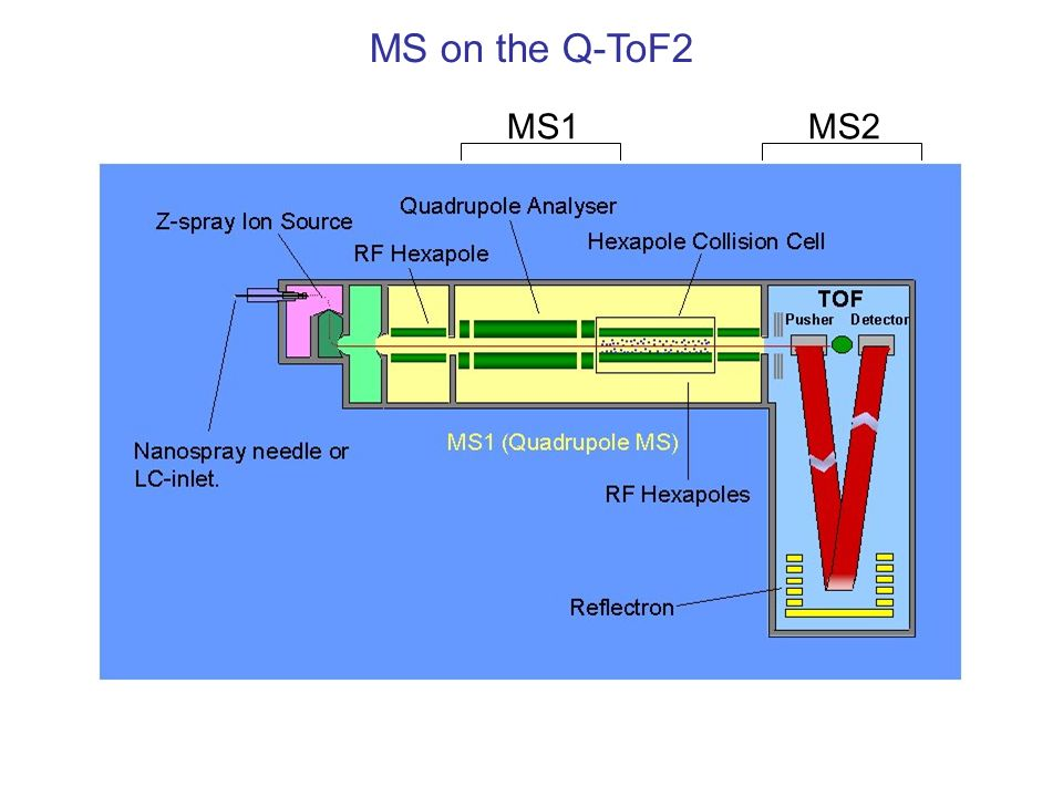 MS2MS1 MS on the Q-ToF2