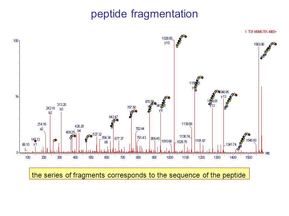 peptide fragmentation the series of fragments corresponds to the sequence of the peptide