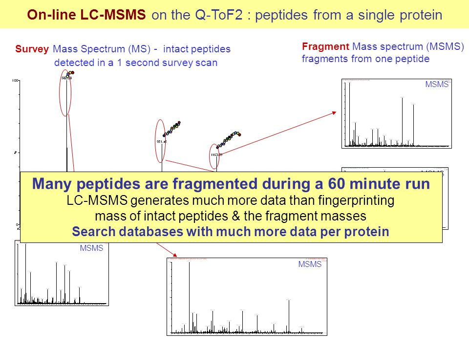 Survey Mass Spectrum (MS) - intact peptides detected in a 1 second survey scan MSMS On-line LC-MSMS on the Q-ToF2 : peptides from a single protein Fra