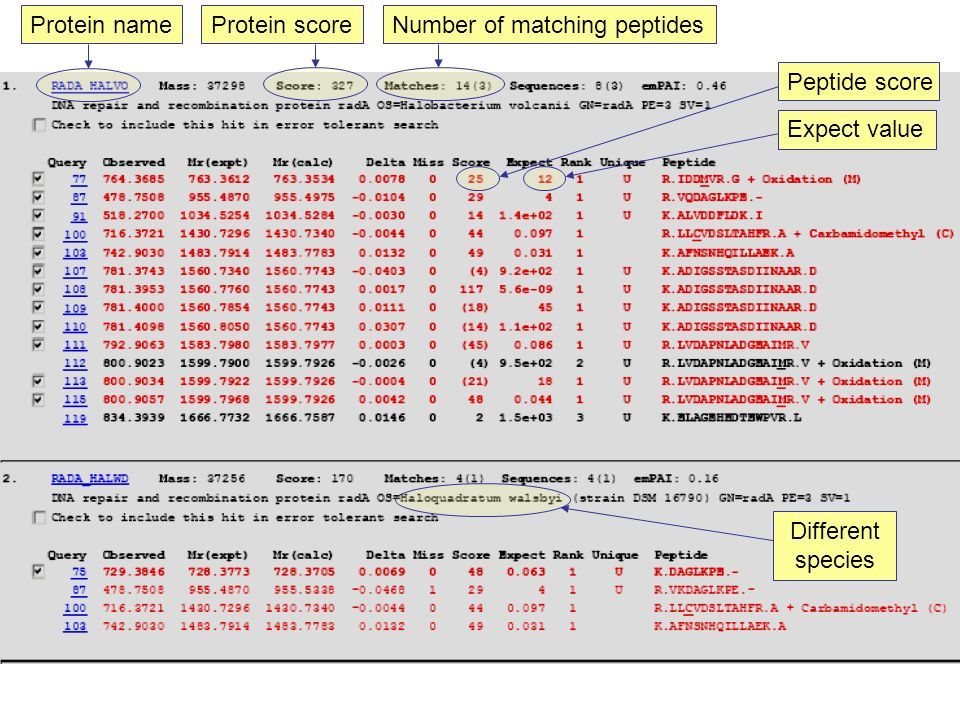Peptide score Expect value Number of matching peptides Protein score Protein name Different species