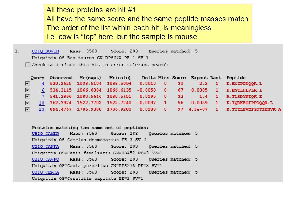 All these proteins are hit #1 All have the same score and the same peptide masses match The order of the list within each hit, is meaningless i.e. cow