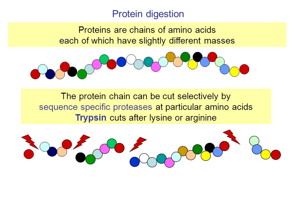 Proteins are chains of amino acids each of which have slightly different masses The protein chain can be cut selectively by sequence specific protease