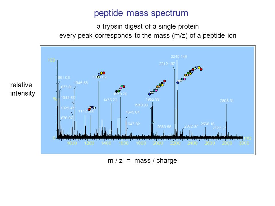peptide mass spectrum a trypsin digest of a single protein every peak corresponds to the mass (m/z) of a peptide ion m / z = mass / charge relative in