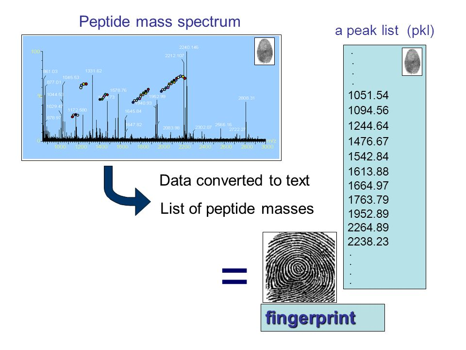 Peptide mass spectrum Data converted to text List of peptide masses. 1051.54 1094.56 1244.64 1476.67 1542.84 1613.88 1664.97 1763.79 1952.89 2264.89 2