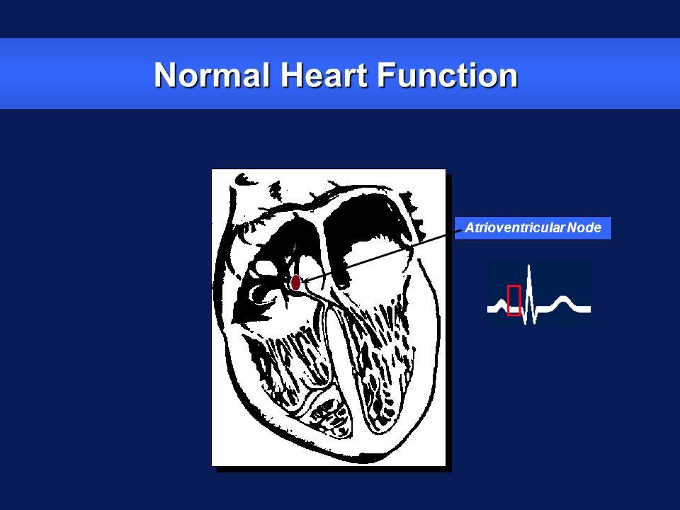 Normal Heart Function Atrioventricular Node