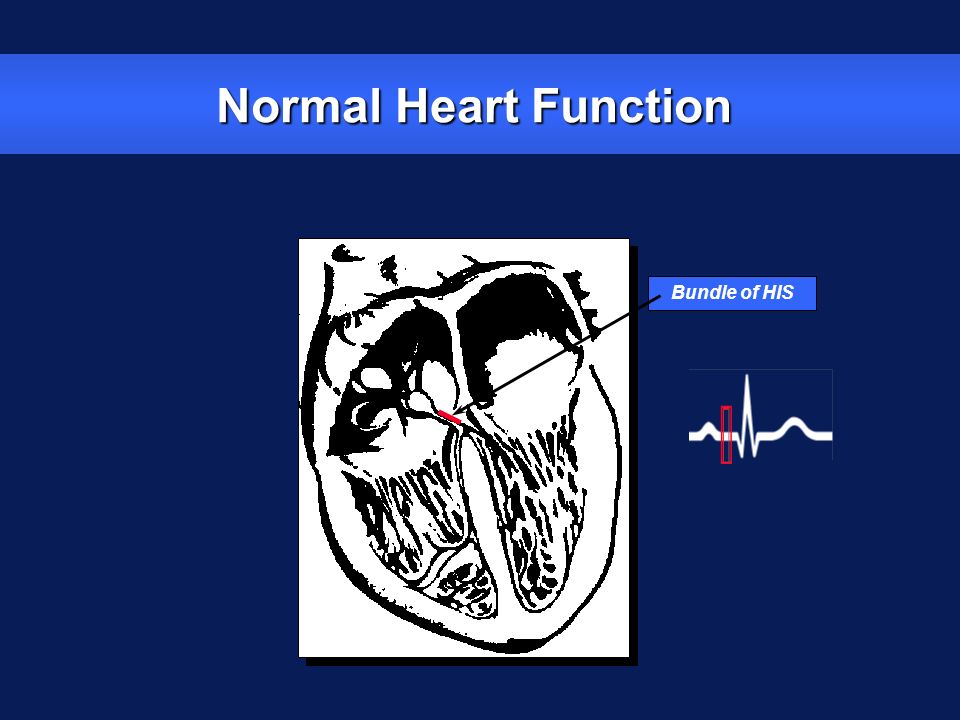 Bundle of HIS Normal Heart Function