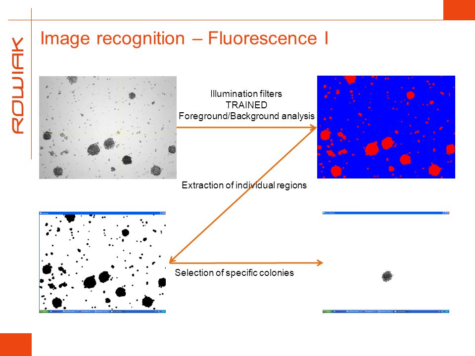 Illumination filters TRAINED Foreground/Background analysis Extraction of individual regions Selection of specific colonies Image recognition – Fluore