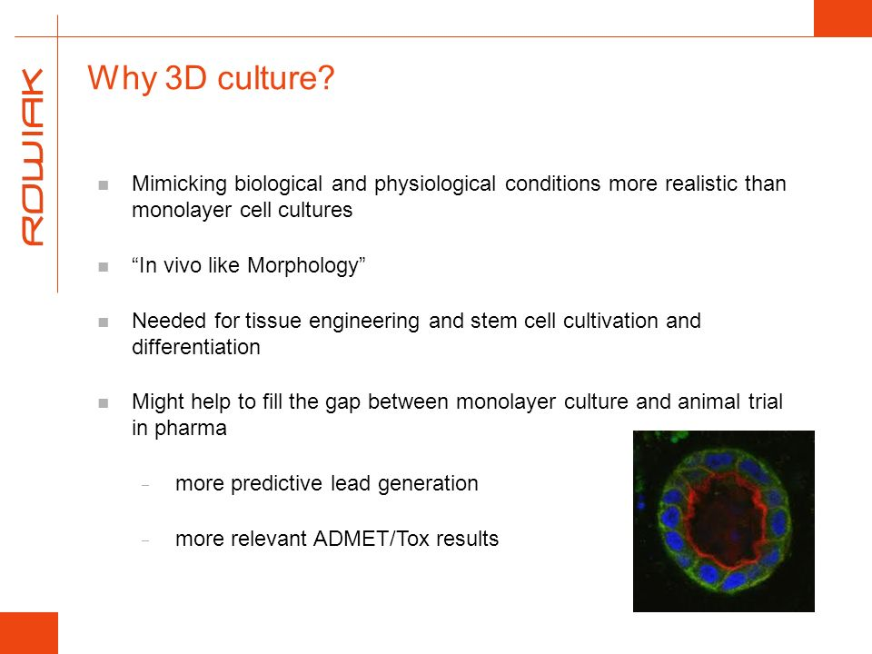 Why 3D culture? Mimicking biological and physiological conditions more realistic than monolayer cell cultures In vivo like Morphology Needed for tissu