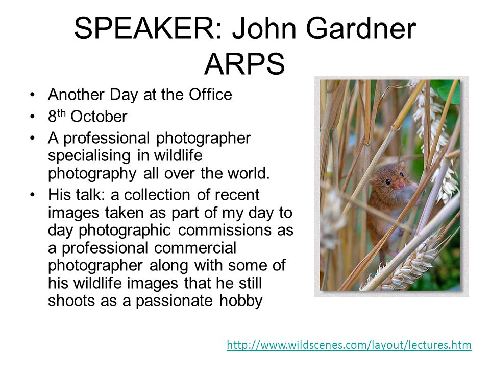 SPEAKER: John Gardner ARPS Another Day at the Office 8 th October A professional photographer specialising in wildlife photography all over the world.