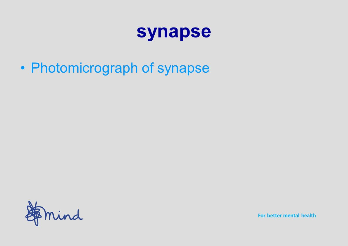 synapse Photomicrograph of synapse