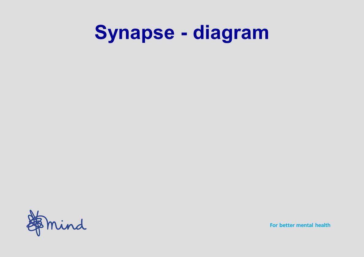 Synapse - diagram