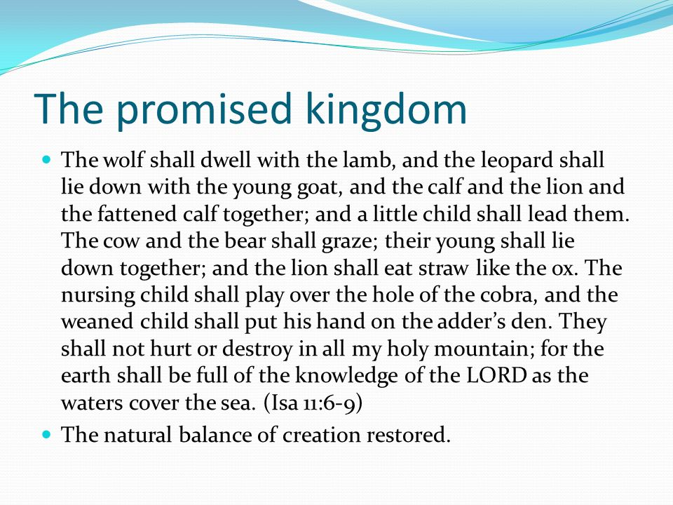 The promised kingdom The wolf shall dwell with the lamb, and the leopard shall lie down with the young goat, and the calf and the lion and the fattene