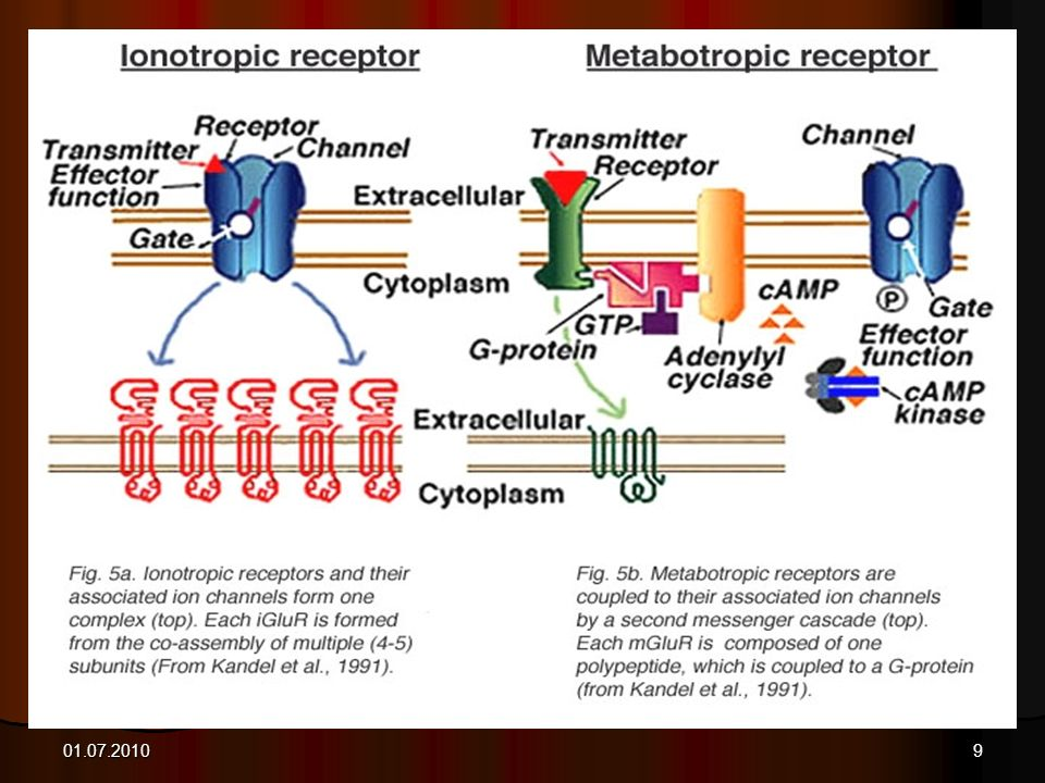9 Glutamate receptors