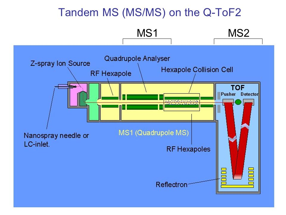 Tandem MS (MS/MS) on the Q-ToF2 MS2MS1