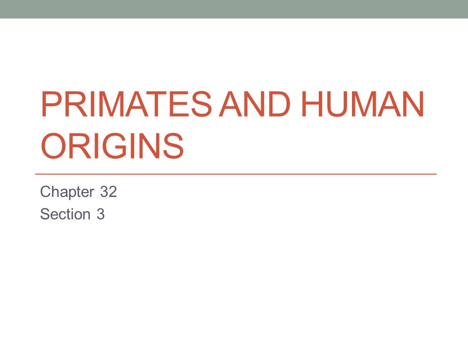 PRIMATES AND HUMAN ORIGINS Chapter 32 Section 3