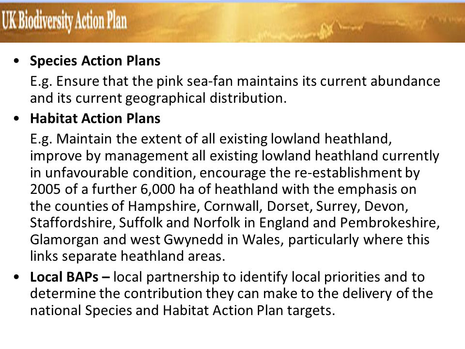 Species Action Plans E.g. Ensure that the pink sea-fan maintains its current abundance and its current geographical distribution. Habitat Action Plans