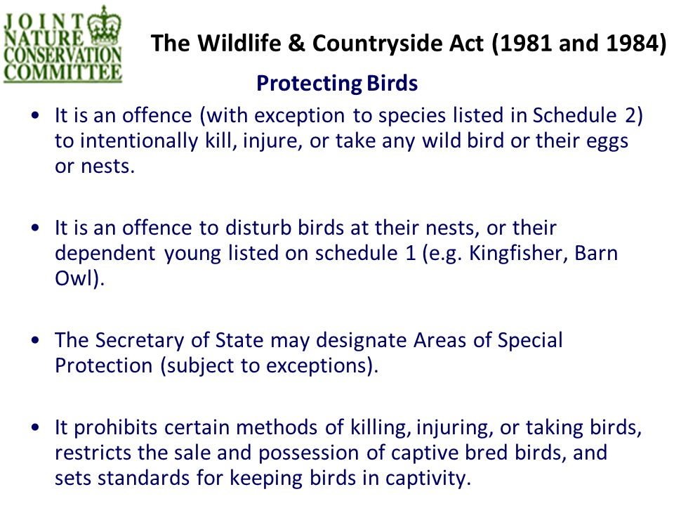 The Wildlife & Countryside Act (1981 and 1984) Protecting Birds It is an offence (with exception to species listed in Schedule 2) to intentionally kill, injure, or take any wild bird or their eggs or nests.