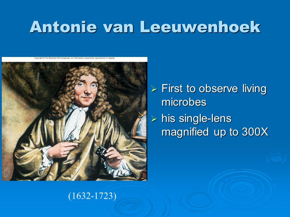 Antonie van Leeuwenhoek First to observe living microbes First to observe living microbes his single-lens magnified up to 300X his single-lens magnifi