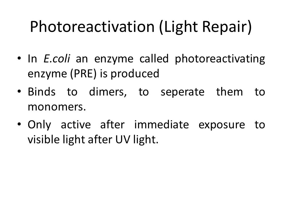 Photoreactivation (Light Repair) In E.coli an enzyme called photoreactivating enzyme (PRE) is produced Binds to dimers, to seperate them to monomers.